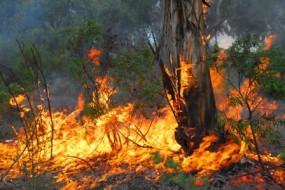 bushfire-example