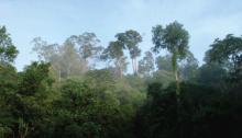 File: Berau rainforest_TNCFitriaRinawati.jpg