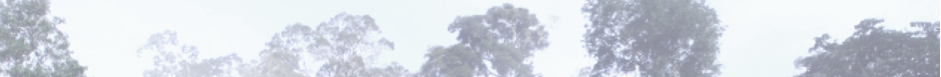 cropped-treetops_pale2_desat.png